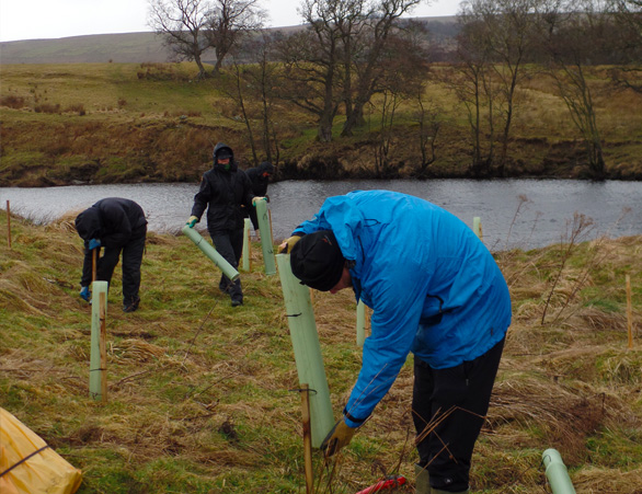 Planting trees at Otterburn